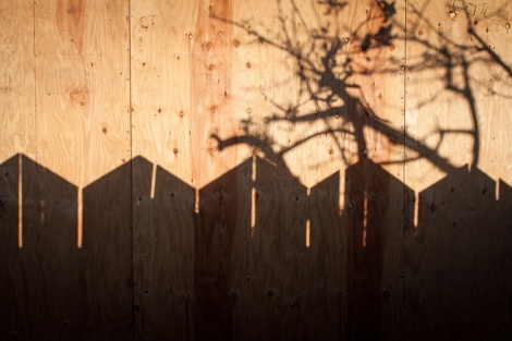 fence and branch silhouette